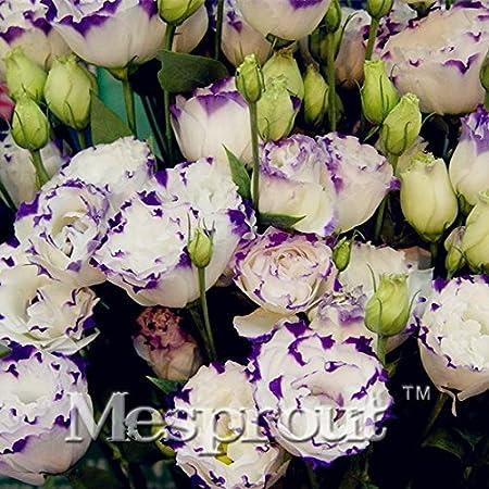 Eustoma Grandiflorum Seeds 100pcs Flowers Seeds Lisianthus Home Garden Bonsai Plants Amazon Co Uk Kitchen Home