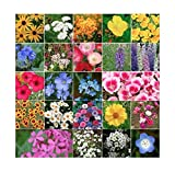 Search : Coastal California Wildflower Mix - Annuals and Perennials Approx. 6500+ Seeds