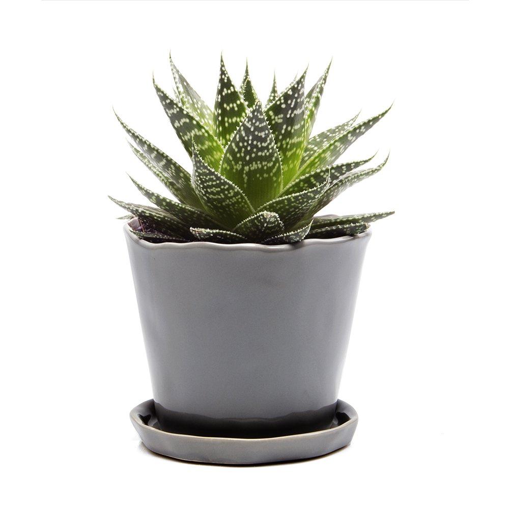 Chive - Big Tika, Large Succulent and Cactus Planter - 5