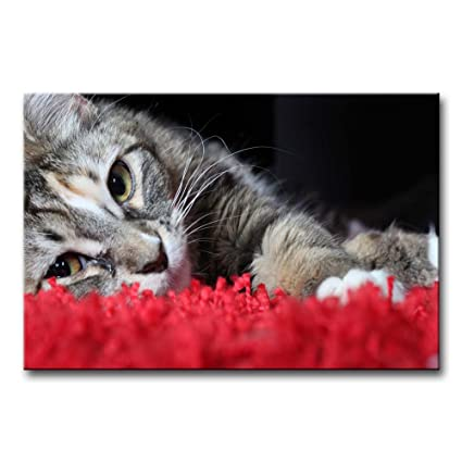 So Crazy Art Black U0026 White And Red Wall Art Painting Cat Lyingin Red Carpet  Prints