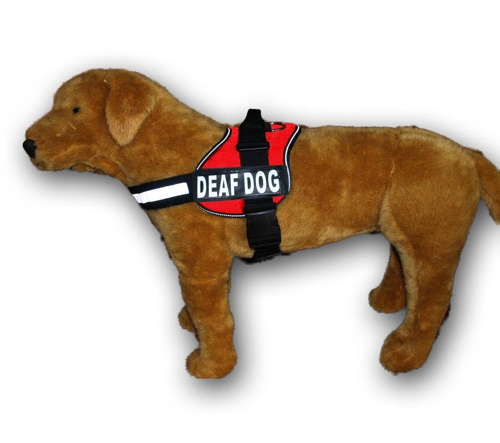 Amazon.com : DEAF DOG Nylon Dog Vest Harness. Purchase comes with 2