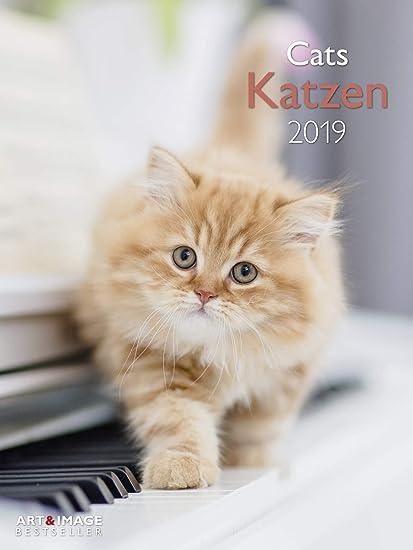Gatos – Calendario 2019 – teneues de Verlag – Art & Image – – Calendario fotográfico – Calendario de pared bonitas gatito – 48 cm x 64 cm: Amazon.es: Oficina y papelería