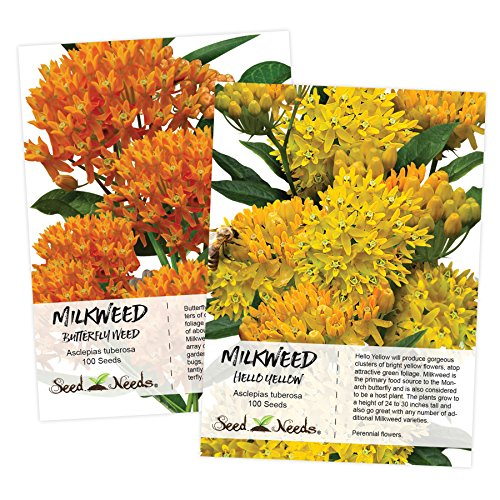 - Butterfly Milkweed Seed Packet Duo (Asclepias tuberosa) Open Pollinated Seeds by Seed Needs
