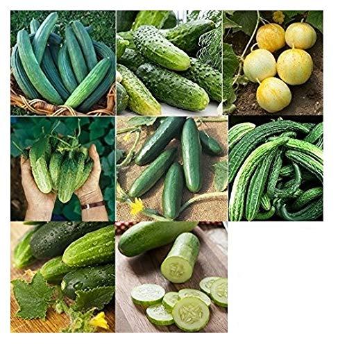 David's Garden Seeds Collection Set Cucumber NEP567 (Green) 8 Varieties 400 Seeds (Open Pollinated, Heirloom, Organic) by David's Garden Seeds