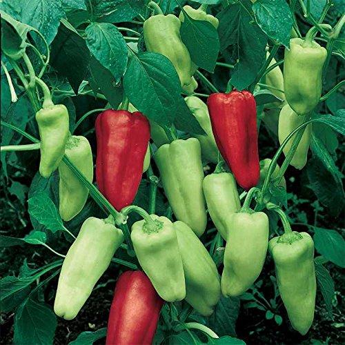 italian pepperoncini - 1