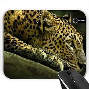 Pad – Leopardo que duerme en una roca - ref 5