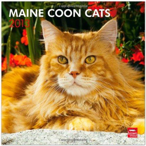 Maine Coon Cats 2013 - Hundekatzen - Original BrownTrout-Kalender