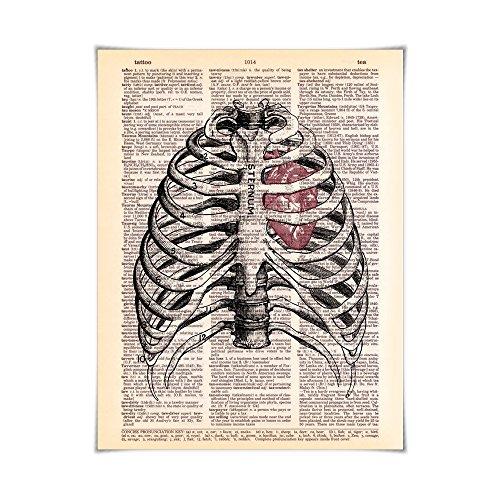 Sternum & Heart Anatomy - Printed on Vintage Dictionary Paper Human Anatomy Art Series