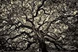 Angel Oak Tree, Charleston SC, Canvas or Metal Ready-to-Hang, Sepia, Nature Photography, Large Wall Art, 7x5 to 72x48 inches