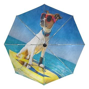 Amazon.com: Gafas de sol de surf para perro, autoabiertas ...