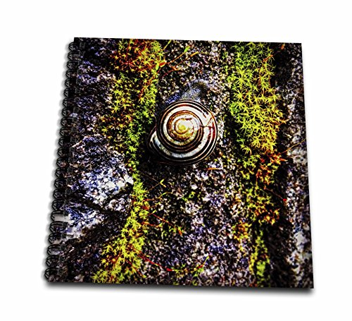 3dRose DYLAN SEIBOLD - PHOTOGRAPHY - Snail Cliff Hanger - Drawing Book 8 x 8 inch (db_262734_1) Book Cliff Photography