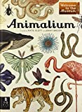 img - for Animalium: Welcome to the Museum book / textbook / text book