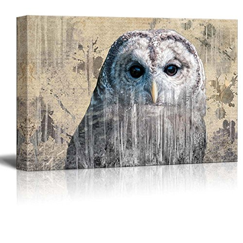wall26 - Double Exposure Close Up of a Grey Barred Owl on a Rustic Style Canvas - Canvas Art Home Decor - 12x18 inches