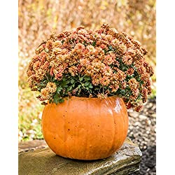 Pumpkin Planter Halloween Stone Pumpkin & Cinderella Jacko'lantern Artificial Gourd Indoor and Outdoor Decor