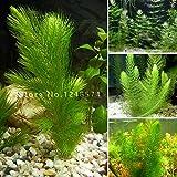 Promotion!!! 500 seeds mixed aquarium fish tank grass seeds water Aquatic plant seed