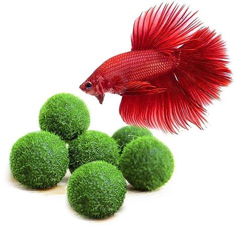 Bolas Beta, plantas de mar en forma de bola, juguetes naturales para peces beta