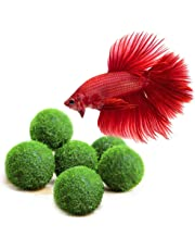 LUFFY Betta Balls : Live Round-Shaped Marimo Plant : Natural Toys for Betta Fish : Aquarium Safe