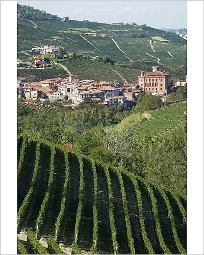 Italy Piedmont Barolo Italian - 10x8 Print of Barolo, Langhe region, Piedmont, Italy, Europe (3619449)
