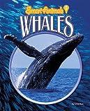 Whales, Lisa Rao, 1597165794