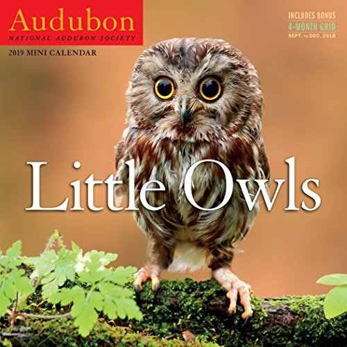 - Audubon Little Owls Mini Wall Calendar 2019