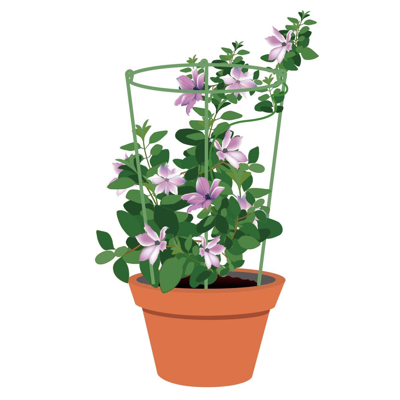 EcoTrellis Mini Trellis Circle 9.84 Inch Dia x 3mm Dia x 16.93 '' H Garden Trellis Plant Support 5 Sets