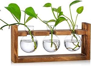 Propagation Station Glass Planter Vase Terrarium Tabletop Plants Desktop Spherical Shape Glass Vase Wooden Stand Flower Pots for Home Office Garden, 3 Vases