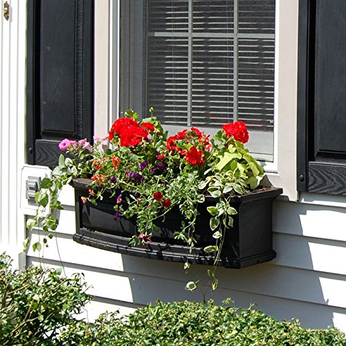 Top Window Boxes