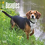 2017 Beagles Mini 7x7 Wall Calendar Dogs {jg} Great Holiday Gift Ideas - Great for mom, dad, sister, brother, grandparents, gay, lgbtq, grandchildren, grandma.