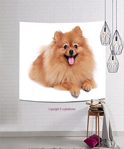 Amazon Com Sophiehome Tapestries185243600 Brown Pomeranian Dog
