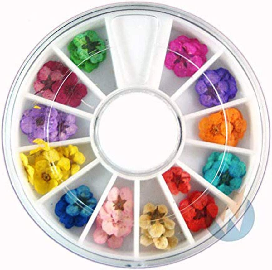 Meidexian888 Nail Art Accessories Real Dry Dried Flowers 12 Colors Bundle Set in Wheel