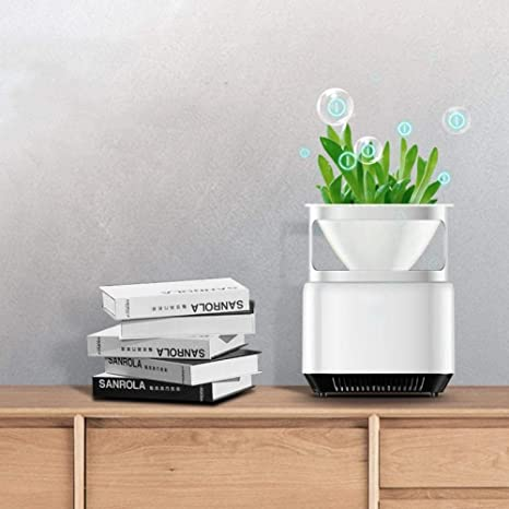 WSJ El purificador de Aire ecológico Puede Plantar Plantas Verdes ...