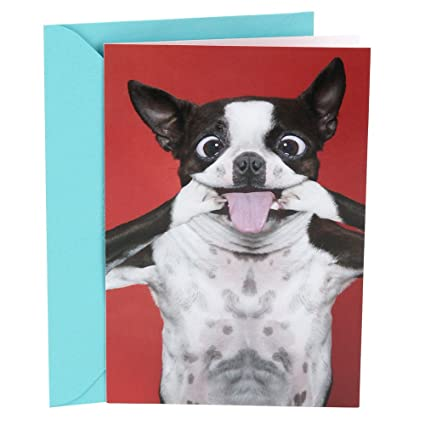 Hallmark Shoebox Funny Birthday Card Dog Smile