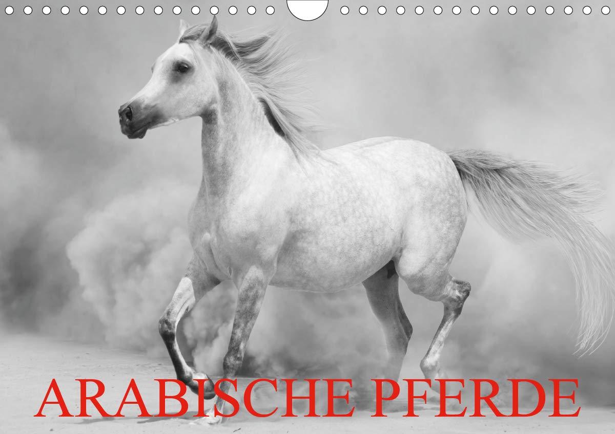 Arabische Pferde  Wandkalender 2020 DIN A4 Quer