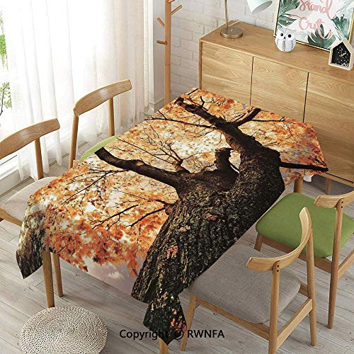 Homenon Decorative Rectangular Table Cloth,Body of Old Tree Seedling Botany Woodsy Roots Falling Maple Leaf Design,Spillproof Modern Printed,Orange Brown,55