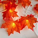 MiMoo Thanksgiving Harvest Fall Garlands String Lights, MiMoo Maple Leaf String Lights, 20LED 6.56ft Battery Powered Harvest Fall Garlands String Lights Autumn Leaf perfect for Thanksgiving Day, Autum Reviews