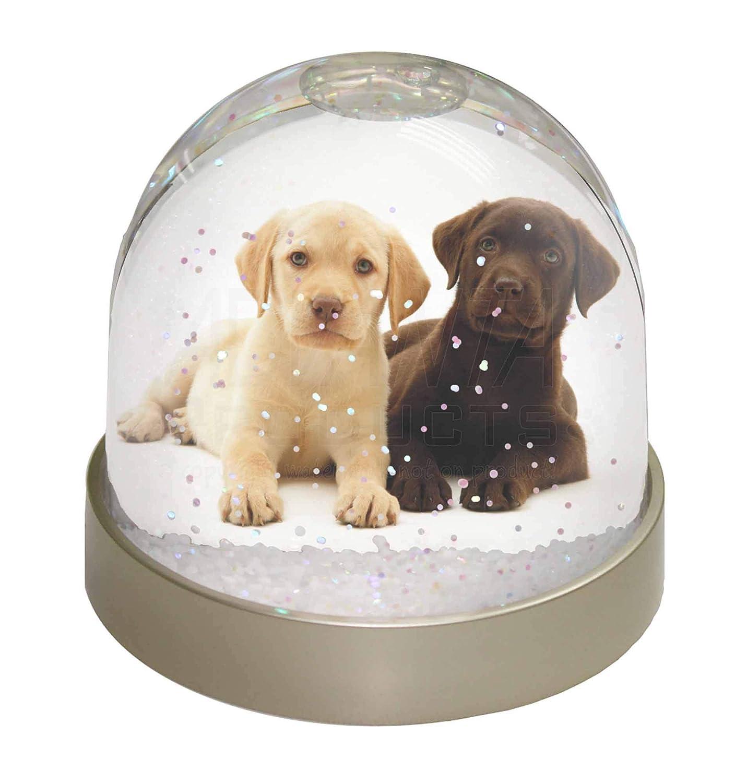 Advanta Group Black Labrador Puppy Snow Dome Globe Waterball Gift 9.2 x 9.2 x 8 cm Multi-Colour