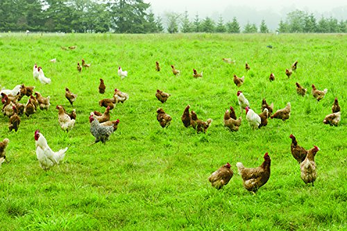 Intermountain West Poultry Pasture Blend (5000 sq ft)