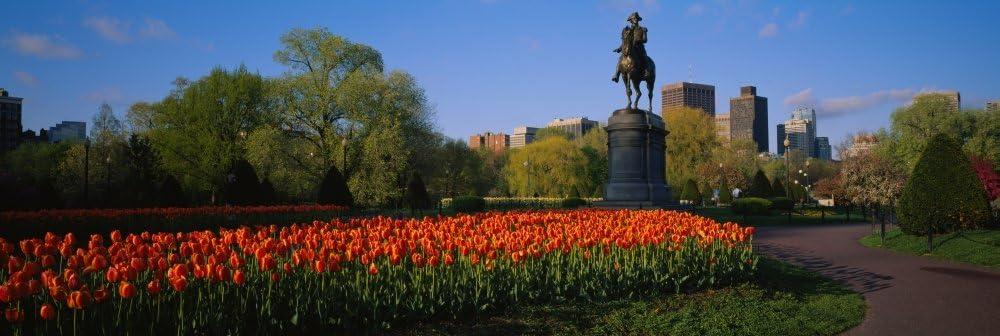 Low angle view of a statue in a garden George Washington Statue Boston Public Garden Boston Massachusetts USA Poster Print (36 x 12)