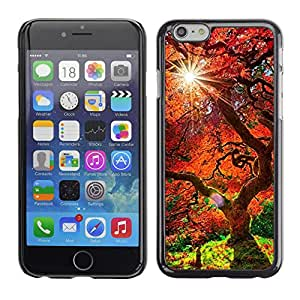 Caucho caso de Shell duro de la cubierta de accesorios de protección BY RAYDREAMMM - Apple Iphone 6 Plus 5.5 - Árbol rojo viejo