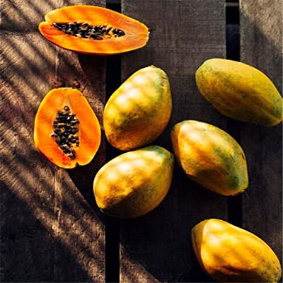 JingYu 100Pcs Dwarf Papaya Fruit Seeds, Sweet and Nutrition Plant for Garden Farm Planting Papaya Seeds : Garden & Outdoor