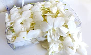 Fresh edible white flower orchid 50 ct amazon grocery fresh edible white flower orchid 50 ct mightylinksfo