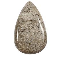 Gems&JewelsHub 24.85CTS 100% Naturale Lovely Designer Fossil Corallo Pietra preziosa Pera cabochon Sciolto