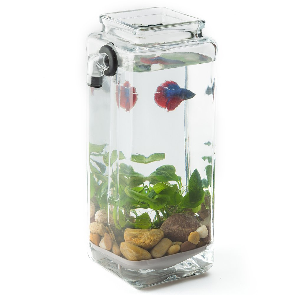 Fish Aquarium Rates In Delhi - Amazon com noclean aquariums gravityflow self cleaning betta aquarium the original self cleaning fish tank beta fish aquarium pet supplies