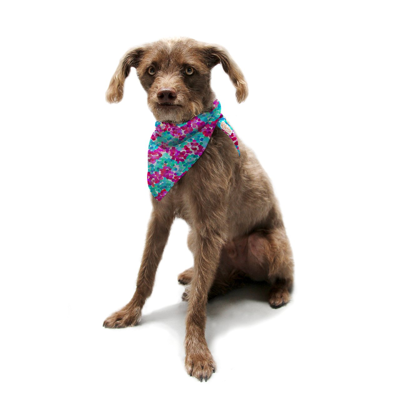 Kess InHouse Beth Engel ''Scattered'' Pet Bandana and Scarf, 28 by 20 by 20-Inch