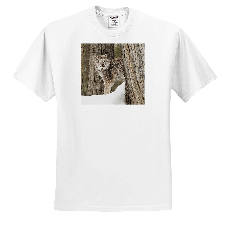 Lynx Montana - Adult T-Shirt XL Captive Canada Lynx or Canadian Lynx in Winter 3dRose Danita Delimont ts/_314908