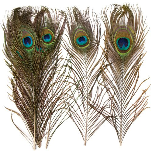 Baker Ross Natural Peacock Feathers for Children/Adult Crafts Collage & Creative Projects - Fancy Dress Costume Mask Decoration (Pack of 10) -