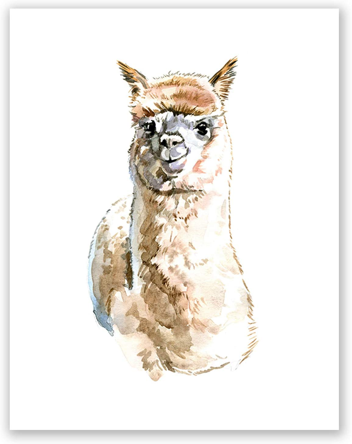 LOVELY ALPACA LLAMA ANIMAL CANVAS PICTURES 6 TO CHOOSE FROM WALL HANGING ART