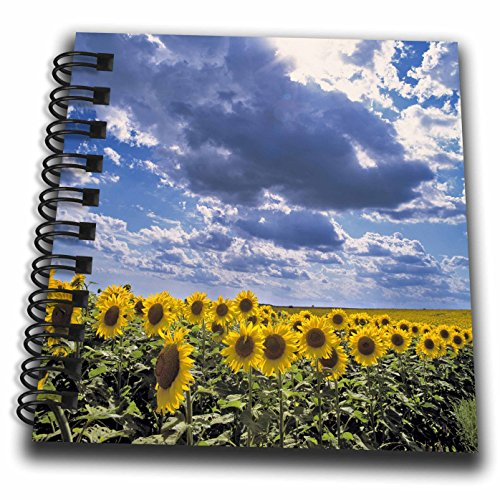 3drose-db-93331-3-north-dakota-sunflowers-in-cass-county-us35-rer0004-ric-argenbright-mini-notepad-4