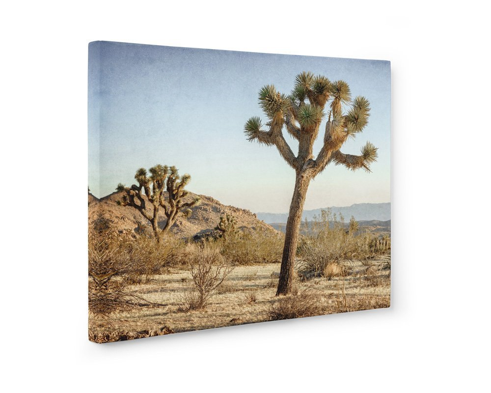 Large Format Print, Canvas or Unframed, Joshua Tree Wall Art, Southwestern Decor, California Desert Picture, Mighty Joshua'