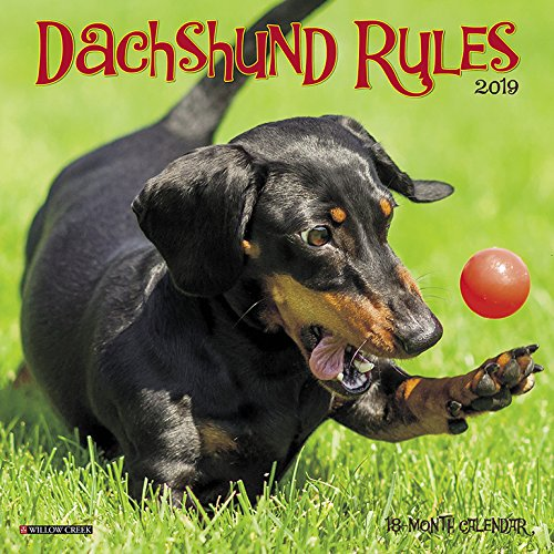 - Dachshund Rules Mini 2019 Wall Calendar (Dog Breed Calendar)